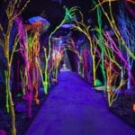 meow-wolf-experience
